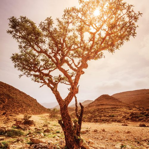 Wilderness tree